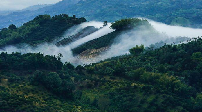Trồng cà phê bao nhiêu lâu sẽ cho thu hoạch?