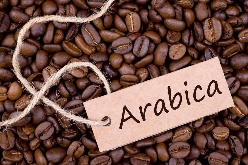 Cà phê Arabica được trồng ở đâu ngon nhất?